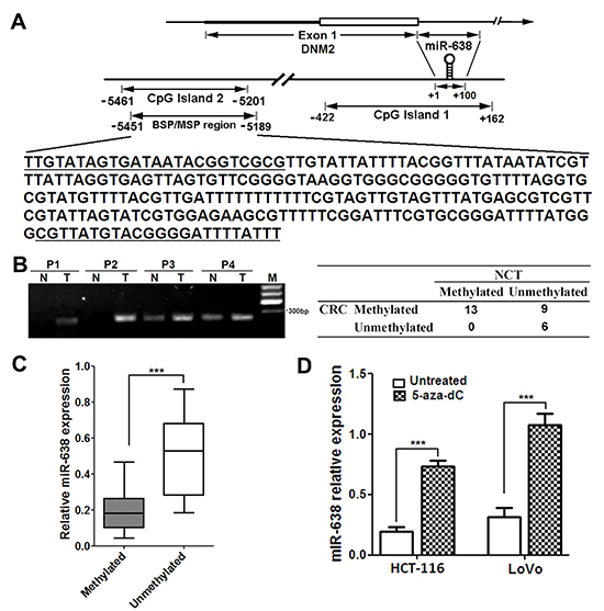 The promoter CpG island of miR-638 gene is hypermethylation in CRC cells.