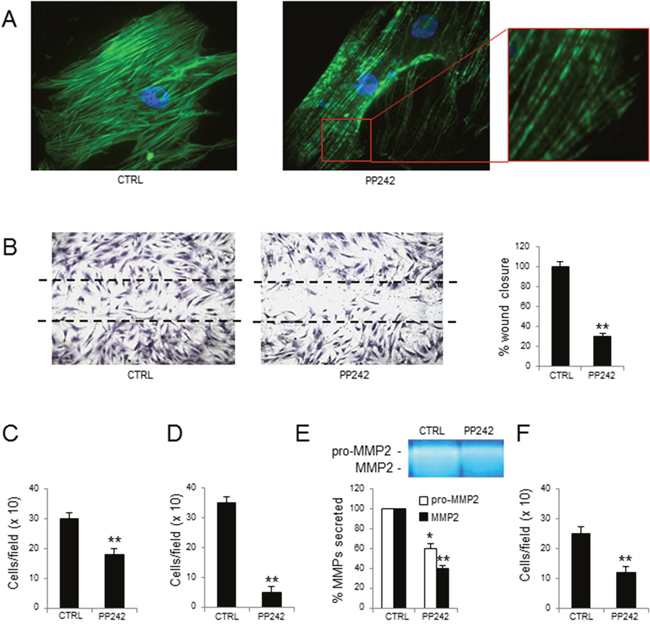 Effects of PP242 treatment on MM-ECs.
