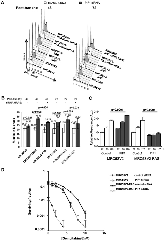 Differential effects of PIF1 depletion on growth and survival of parental and MRC5SV2-RAS cells (clone 2).