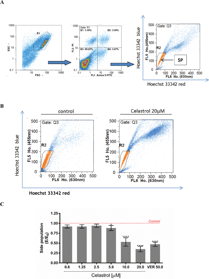The effect of celastrol on cell size of the SP subpopulation in LOVO/DX cell cultures.