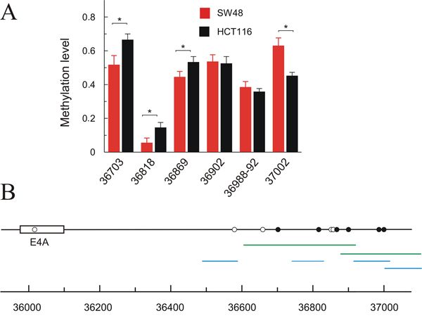 Methylation level of CpGs downstream exon 6 (4A) in HCT116 and SW48 cell lines.