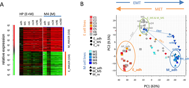 Stability of the intermediate E/M state in epithelial but not in mesenchymal cell lines.
