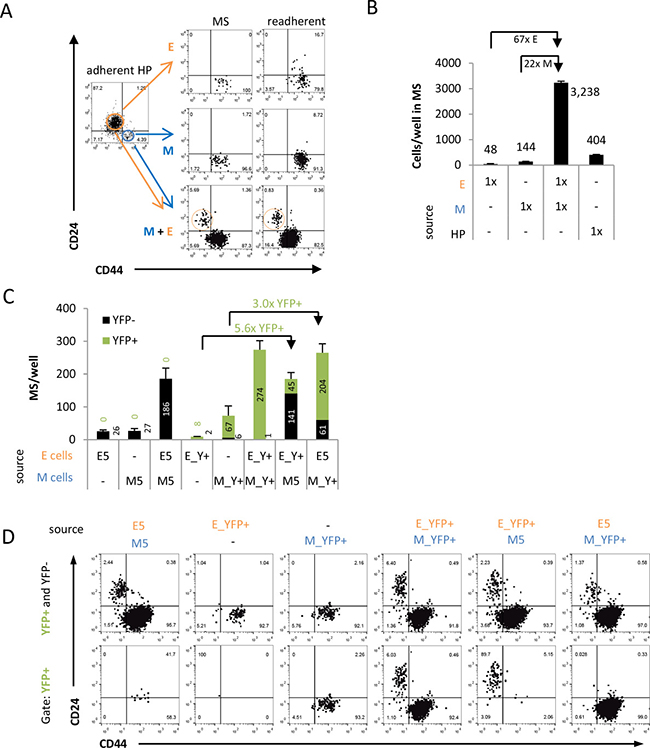 Coculture with M cells facilitates E cell persistence and inhibition of EMT in suspension.
