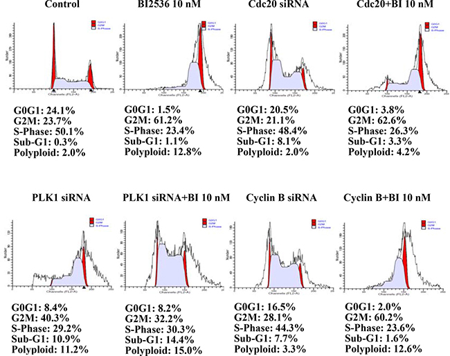 Flow cytometry of SAS cells transfected with siRNA for 24 h.