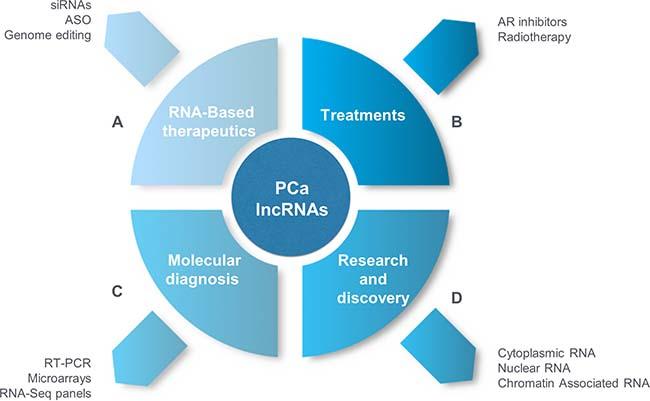 Long non-coding RNAs in PCa and precision medicine.