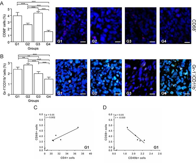 Autologous tumor cells/BCG/formalin vaccine reduces TAMs and MDSCs recruitment.