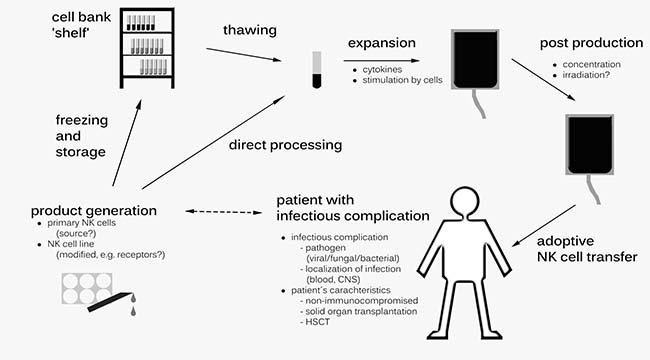 Potential strategies of generating Natural Killer (NK) cells as an immunotherapeutic tool for patients suffering from infectious complications.