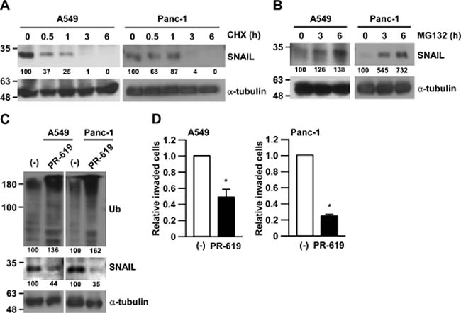 Inhibition of deubiquitinating enzymes suppressed cancer cell invasion.