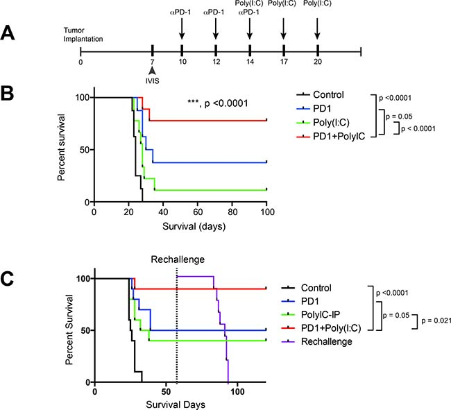 TLR3 activation + anti–PD-1 demonstrates superior survival profile compared to monotherapy regimens.