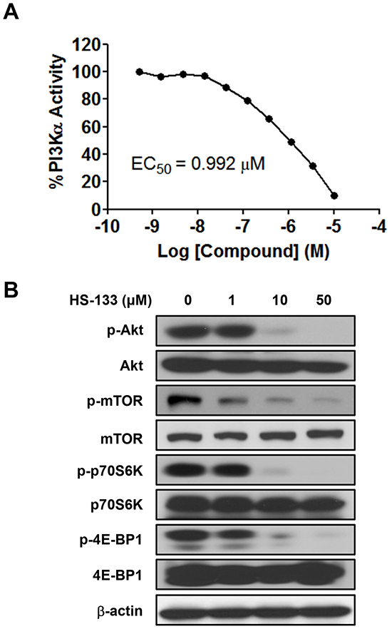 Effect of HS-133 on PI3K/Akt signaling pathway in SkBr3 cells.