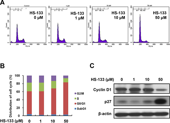Effect of HS-133 on cell cycle in SkBr3 cells.