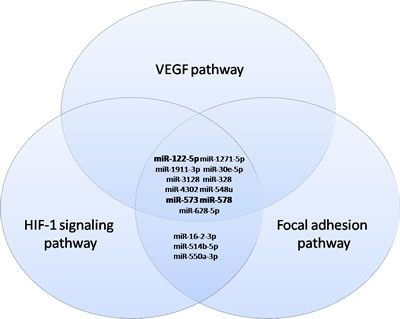 Venn diagrams representing commonly deregulated miRNAs in the VEGF, Focal adhesion and HIF-1 signaling pathways.
