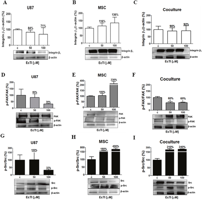 Effects of EcTI on integrin expression and intracellular signalling.