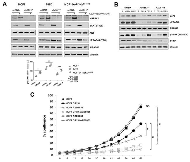 MAP3K1 inhibition reduces sensitivity to upstream PI3K pathway inhibitors.