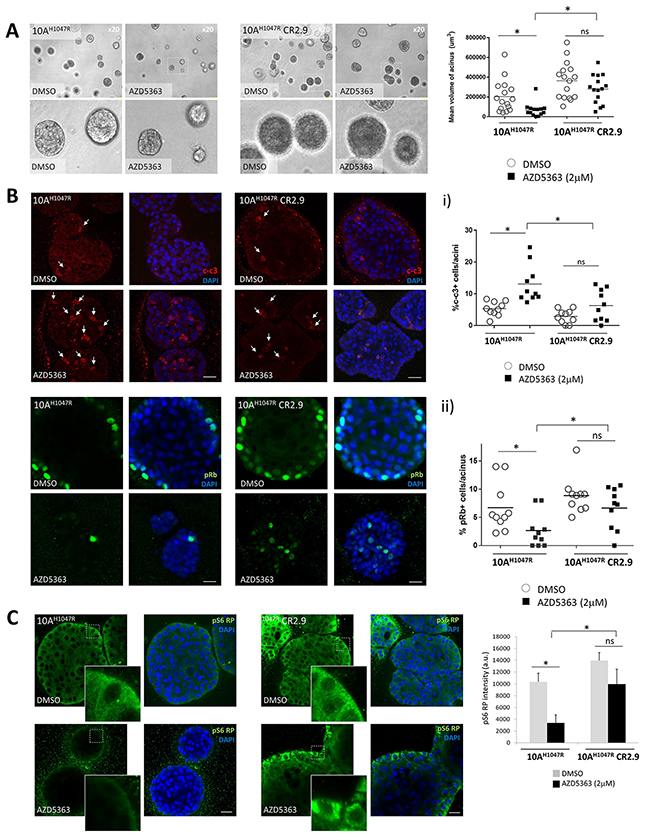 MAP3K1 depletion in 3D-MCF10A-PI3KαH1047R acini elicits apoptosis resistance and increased proliferation.