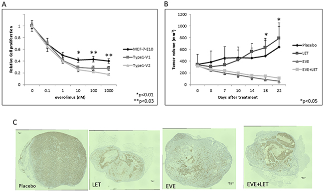 Effects of everolimus in various EDR cell types in vitro and in vivo.