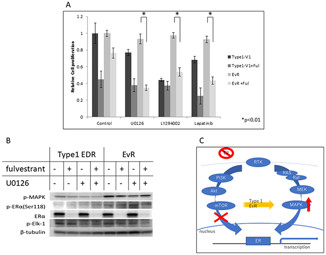 Effects of various agents in Type 1 EDR-V1 and EvR-v1 (from EDR-V1) cells.