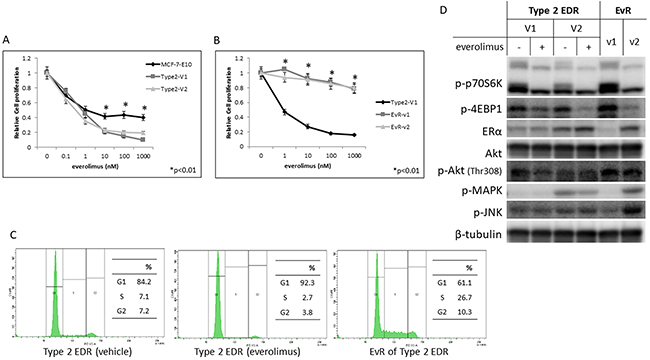 Effect of everolimus on MCF-7-E10 cells and two variants (V1, V2) of Type 2 EDR cells.