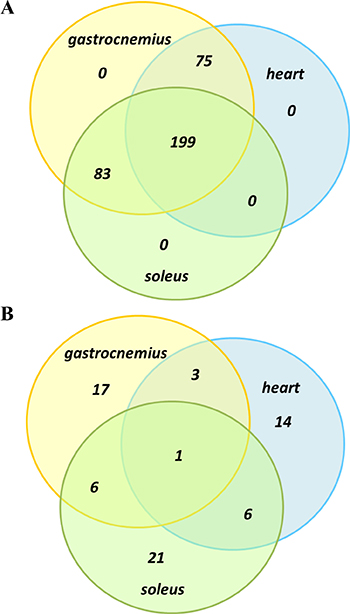 Oncotarget Proteomic Profiling Of Skeletal And Cardiac Muscle In