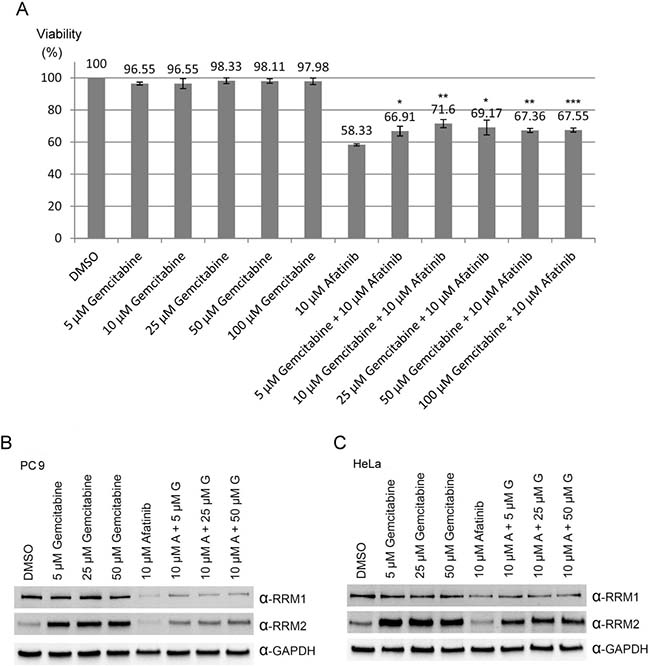 Combination treatments of afatinib and gemcitabine in PC-9 cells.