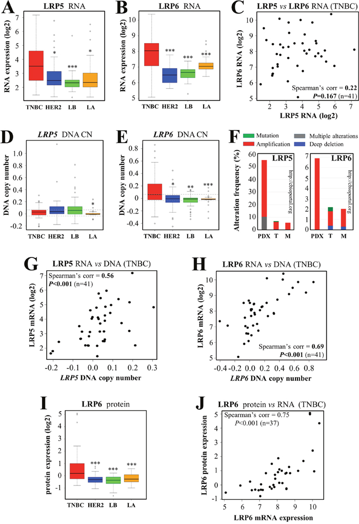 LRP5 and LRP6 are more strongly expressed in TNBC than in other breast cancer subtypes.