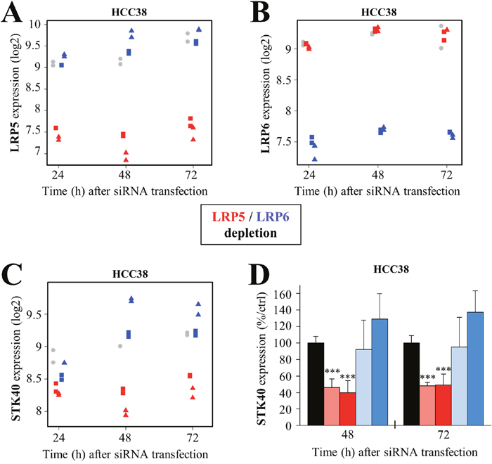 LRP5 regulates STK40 expression at the transcriptomic level.