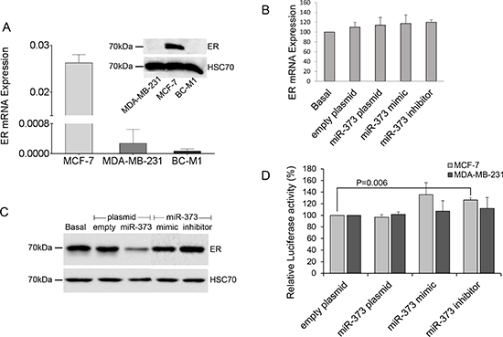 Downregulation of ER protein levels by miR-373.