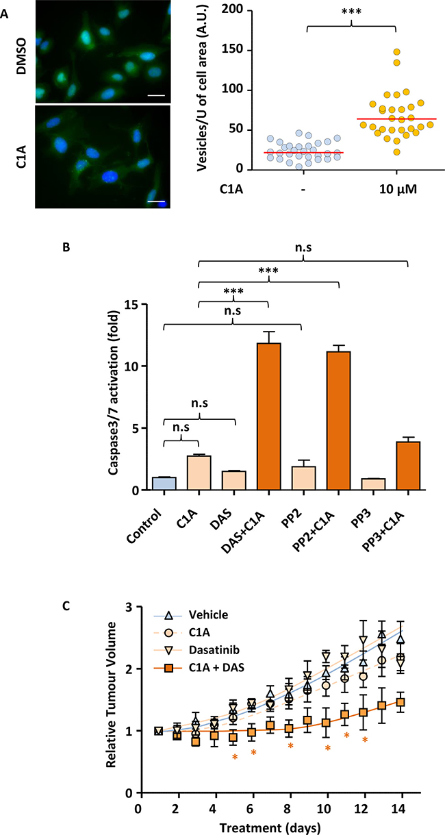 Autophagy inhibition enables dasatinib to reduce tumour volume in A549 mice xenografts.
