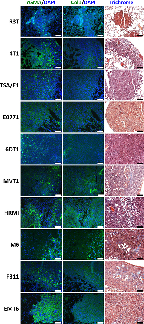 Staining analysis of metastatic lung tissue from ten mouse models of breast cancer.