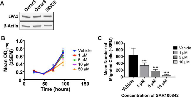 SAR100842 reduced motility of ovarian cancer cell lines in vitro.