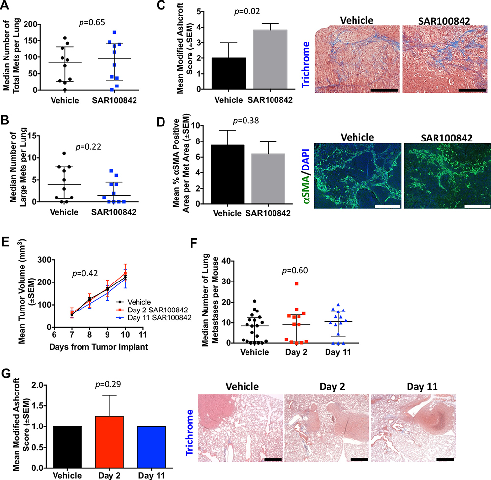 SAR100842 did not prevent metastases or attenuate fibrosis in two mouse models of metastatic triple-negative breast cancer.
