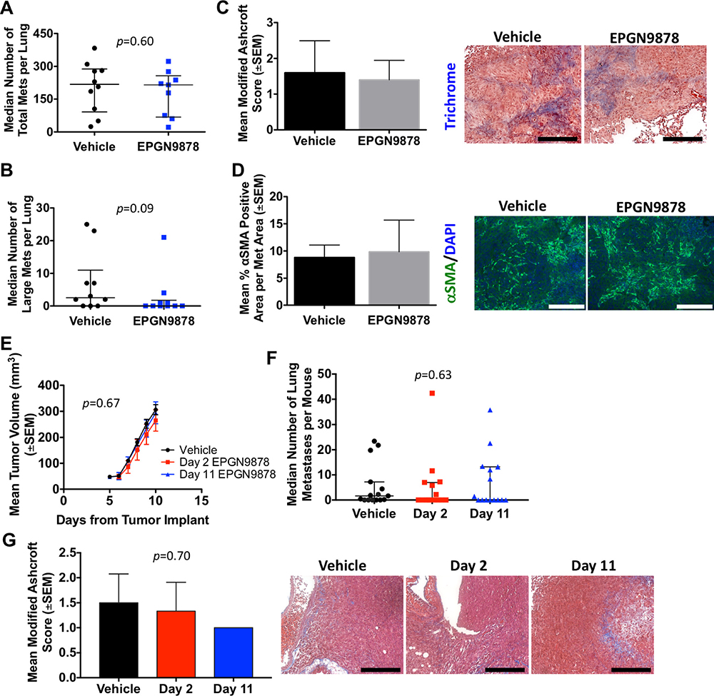 EPGN9878 did not prevent metastases or attenuate fibrosis in two mouse models of metastatic triple-negative breast cancer.