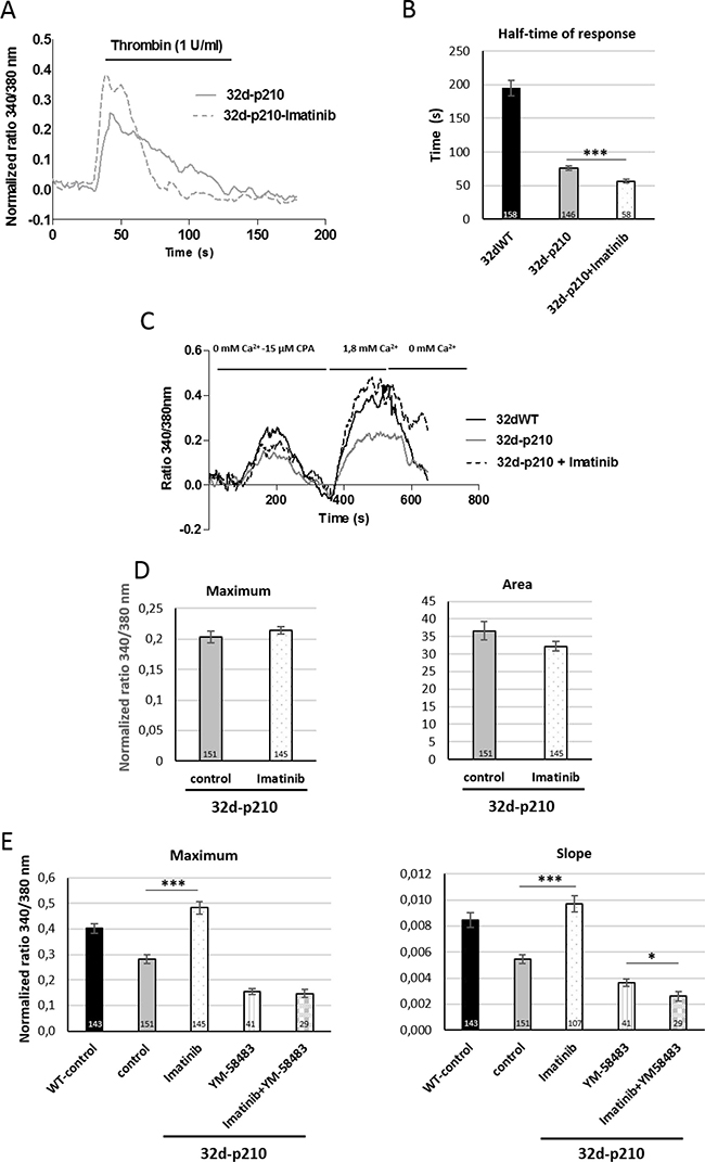 Role of Bcr-Abl tyrosine kinase activity.