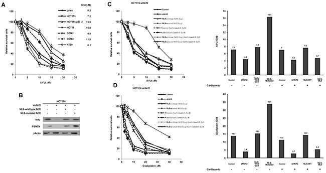cNrf2 may contribute more than nNrf2 to 5-FU and oxaliplatin resistance and the resistance can be reversed by carfilzomib treatment.