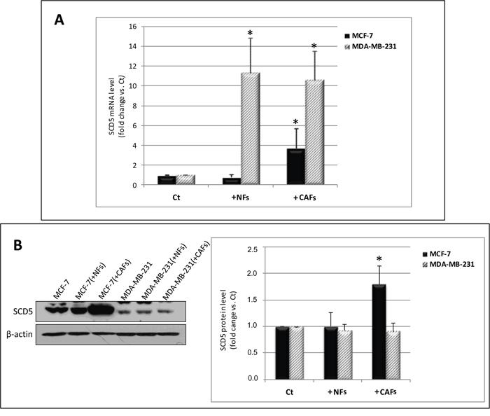 Oncotarget | Pivotal role of human stearoyl-CoA desaturases