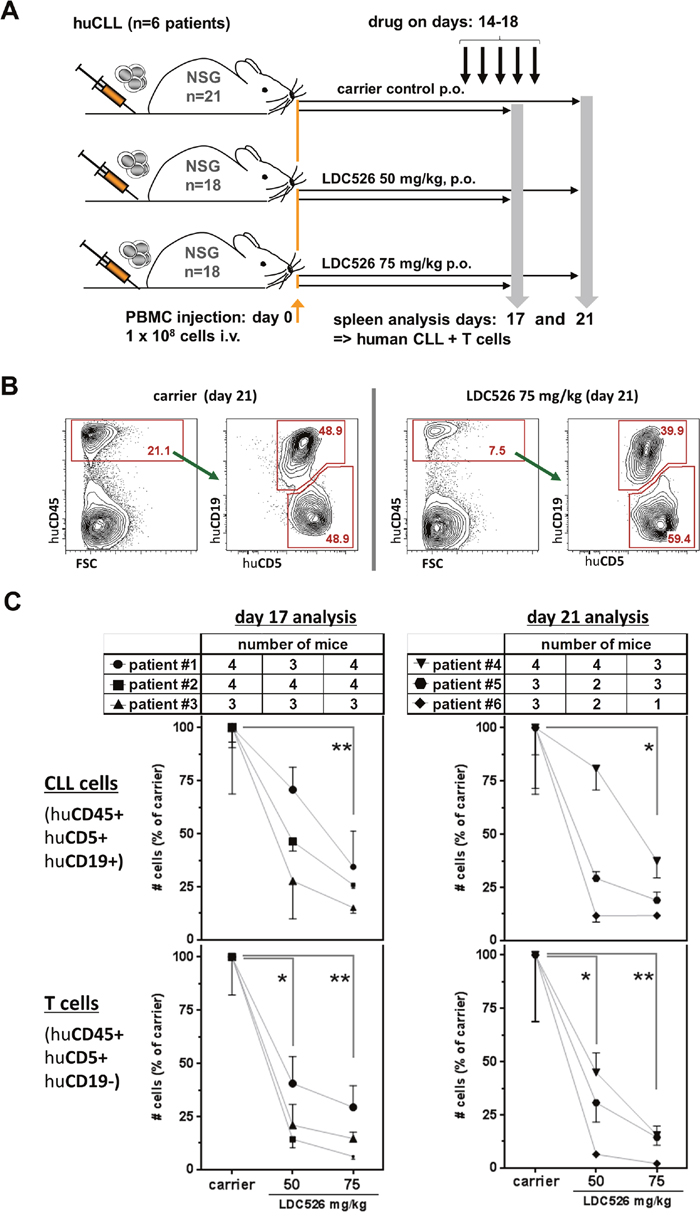 LDC526 decreases splenic human CLL numbers in xenografted NSG mice.