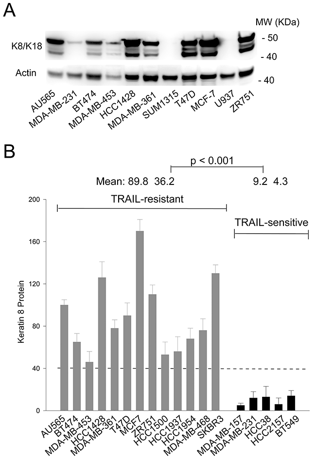 K8/K18 is overexpressed in TRAIL resistant breast cancer cell lines.