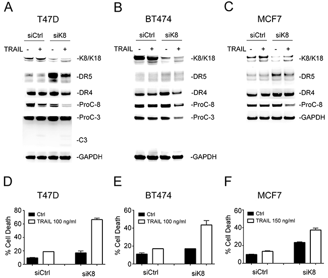 Knockdown of K8 enhances TRAIL induced apoptosis.