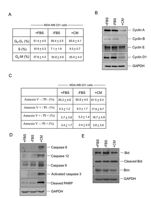 Administration of hUCESCs-CM to MDA-MB-231 cells delayed the cell cycle and increased apoptosis.