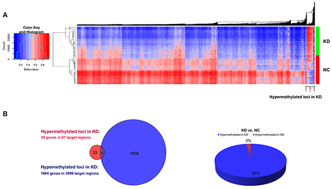 Differential methylation of individual CpG loci in peripheral blood.