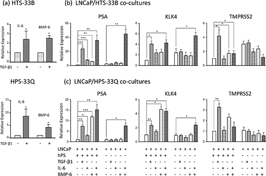 IL-6 and BMP-6 induces AR activation in LNCaP cells.