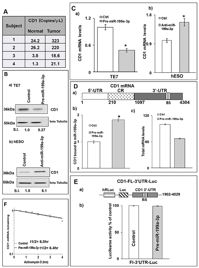 MiR-199a-3p decreases CD1 expression in human esophageal cells.