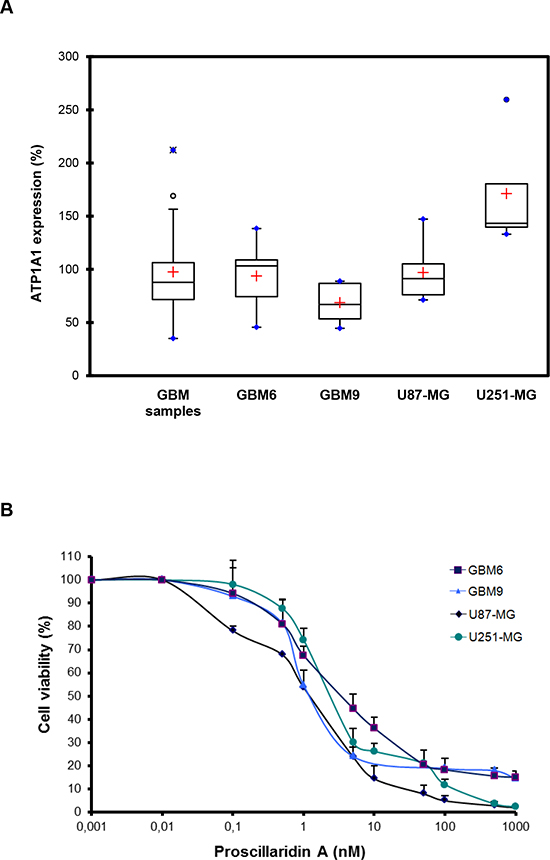Evidence of ATP1A1 in GBM human samples and cell lines and cytotoxic effect of proscillaridin A.