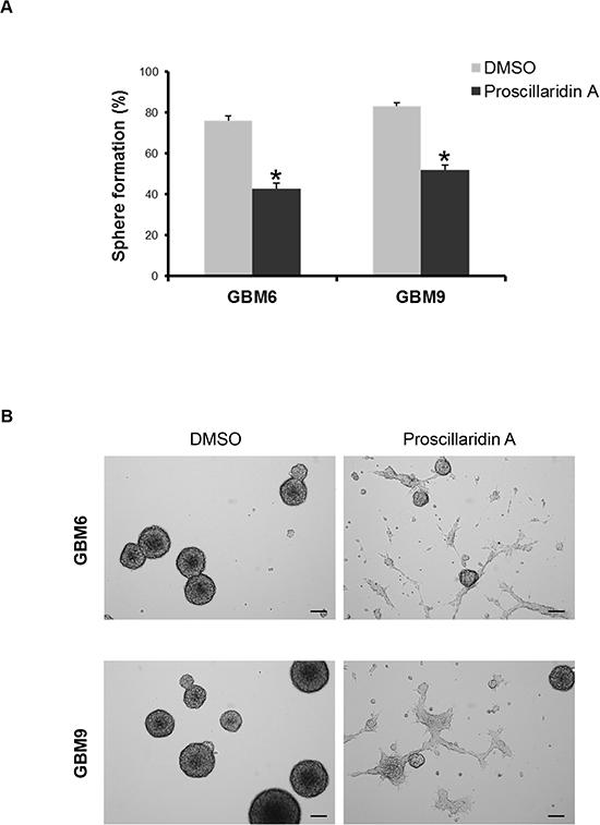 Proscillaridin A treatment and stem cell self-renewal.