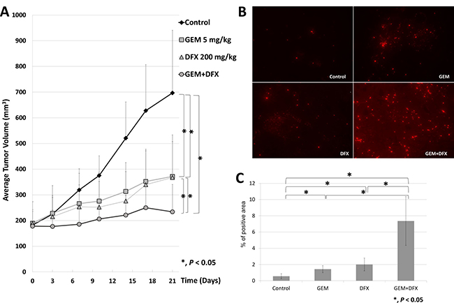 GEM+DFX suppressed tumor growth and induced apoptosis without any serious side effects in vivo.