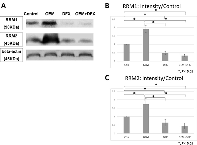 DFX suppressed RRM1 and RRM2 protein expression levels.