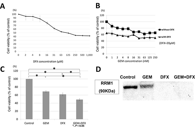 Panc-1 showed same trend as BxPC-3 in antiproliferative activity and RRM1 protein expression levels.