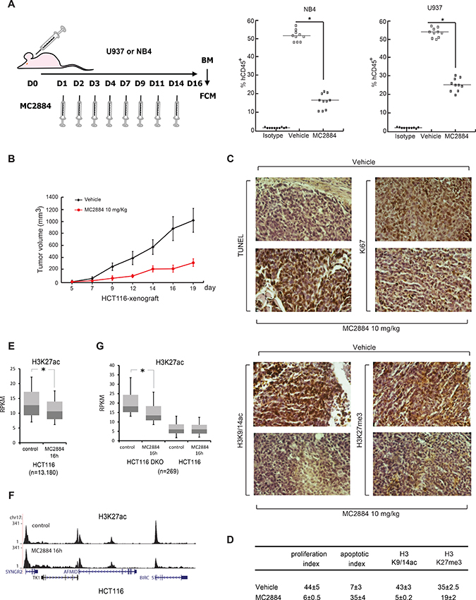 MC2884 displays anticancer action in both hematological and solid cancer in vivo.