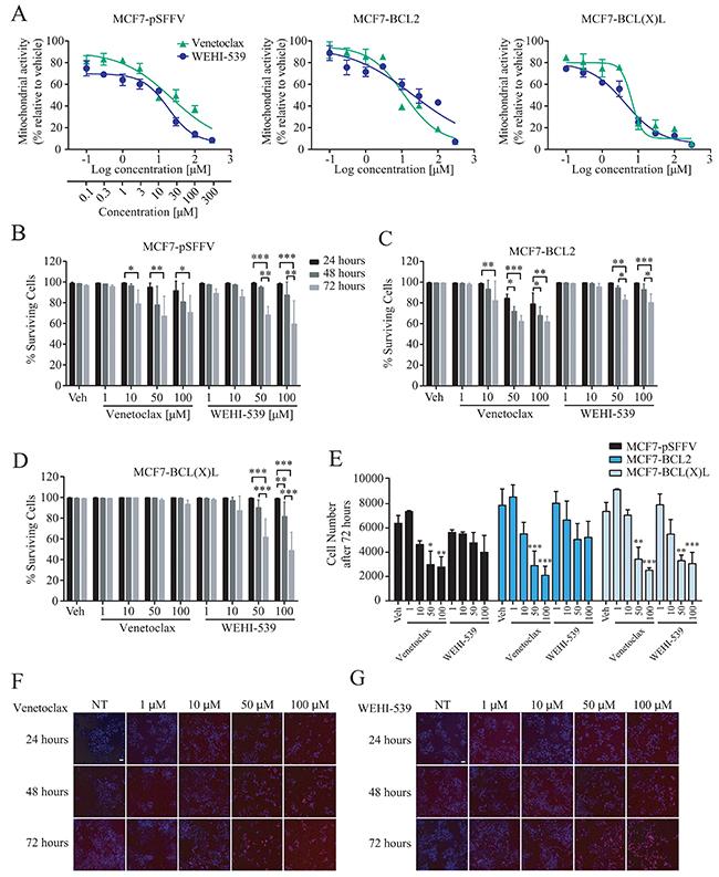 BCL2 inhibitors decrease mitochondrial function.