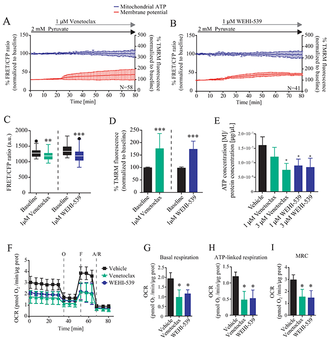 BCL2 and BCL(X)L selective inhibition decrease mitochondrial bioenergetics.